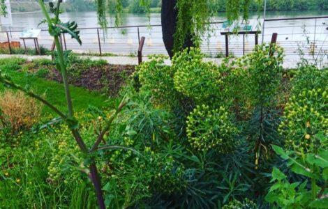 Mon arbre, ma maison Garonne